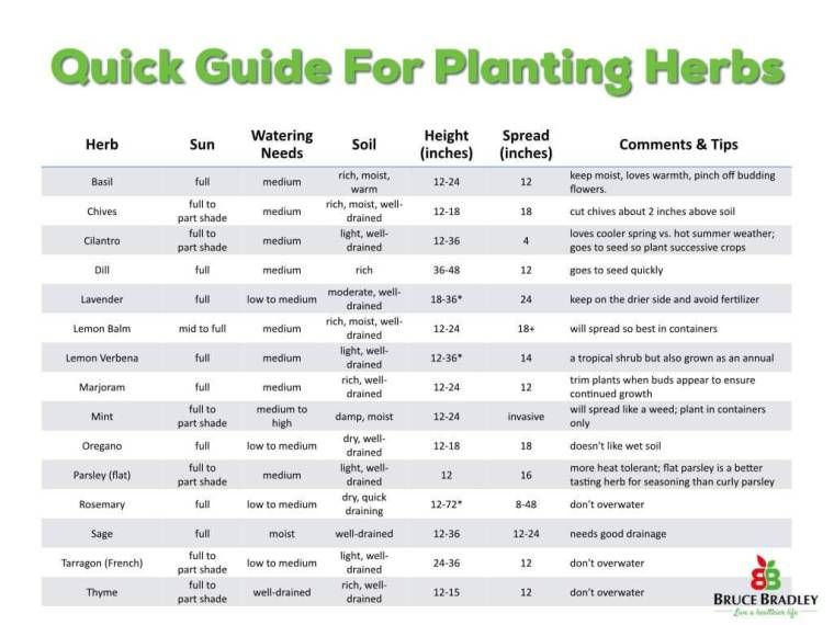Simple Tips for Growing Herbs in Container Gardens is part of Container herb garden, Outdoor herb garden, Herb containers, Planting herbs, Container gardening, Herb garden - Okay, I admit it  I'm not much of a gardener  I just don't have a green thumb  That's why I had a seasoned gardener share her years of experience on how to get