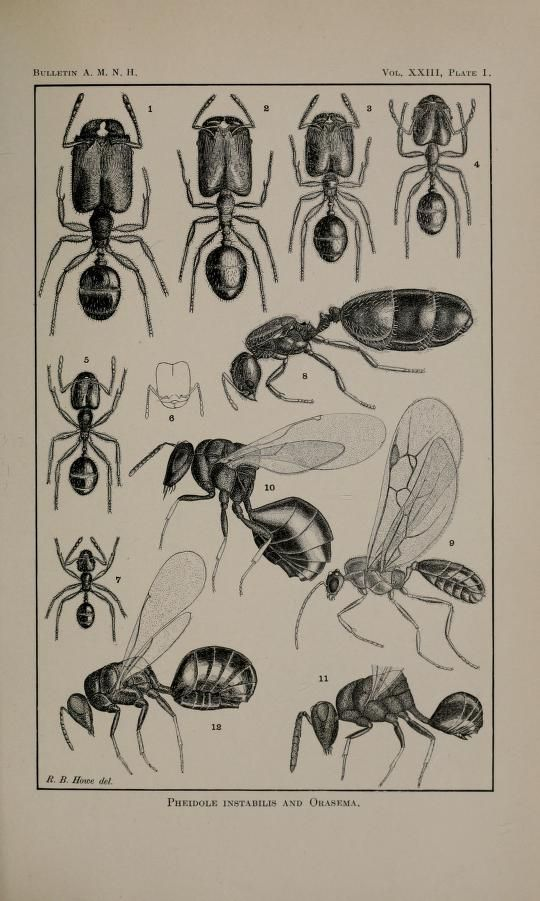 Collected papers on ants, William Morton Wheeler, 1905. | Animados ...