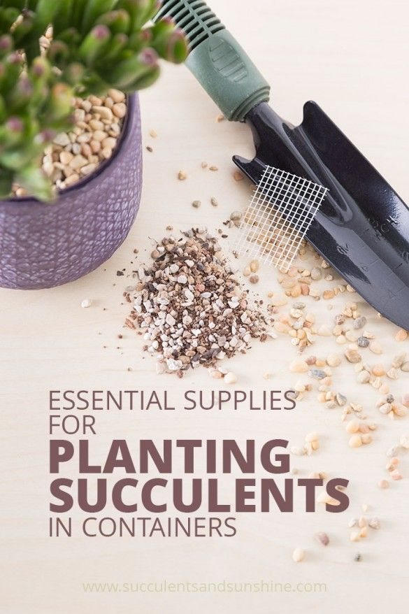 Basic Supplies for Planting Succulents   Succulents and Sunshine