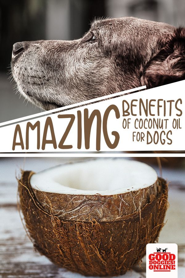 17 Amazing Health Benefits of Coconut Oil for Dogs Dog