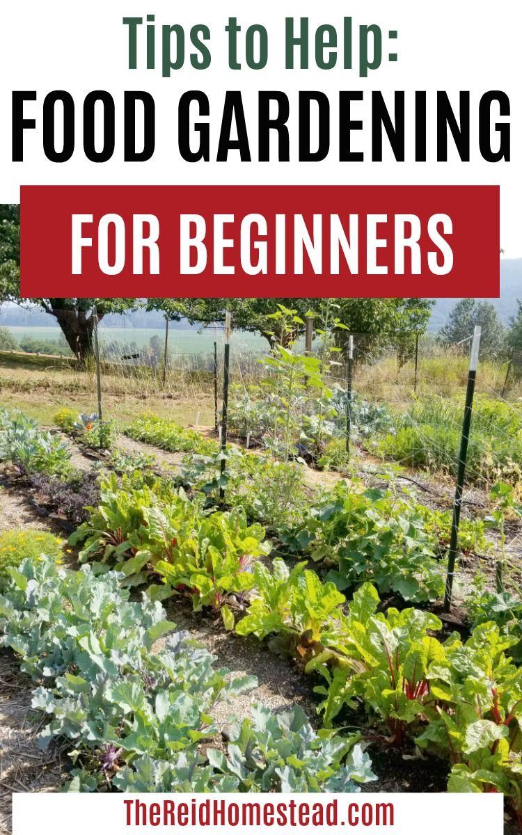 Food Gardening For Beginners Gardening For Beginners Vegetable