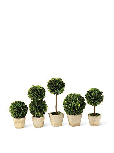 Napa Home Garden Preserved Boxwood Topiaries Mini Set Of 5 * Read More At  The Image