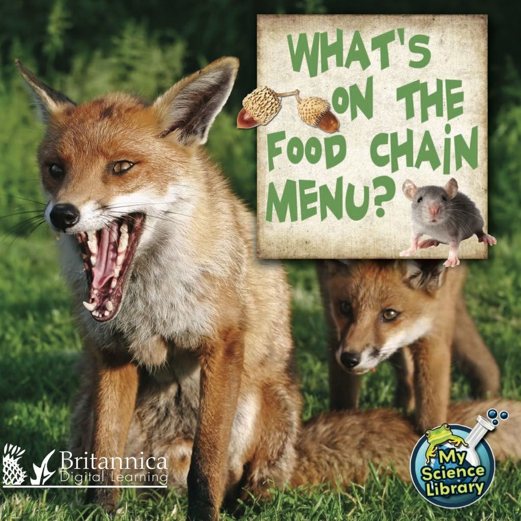 What S On The Food Chain Menu Ebook In