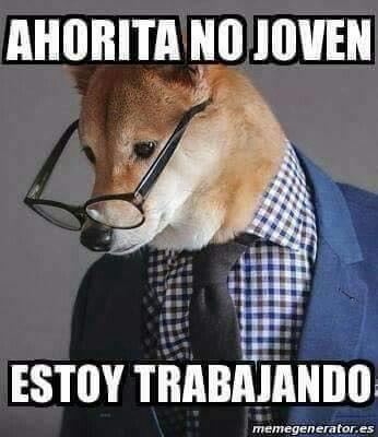 Perros Trabajando Funny Animals Funny Animal Memes Cute Funny Animals