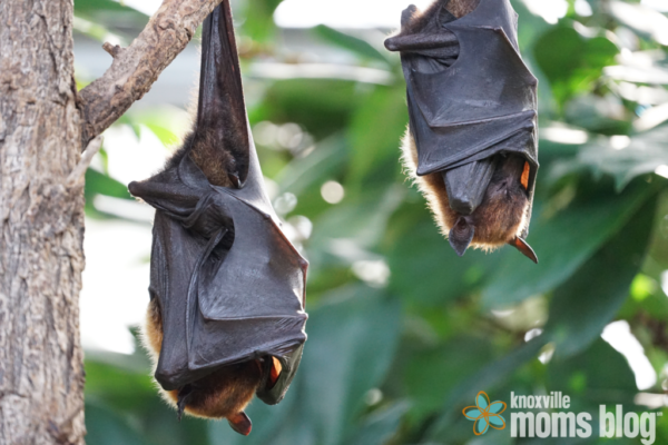 I Have What Living In My Attic How To Attract Bats Mammals Bat Species