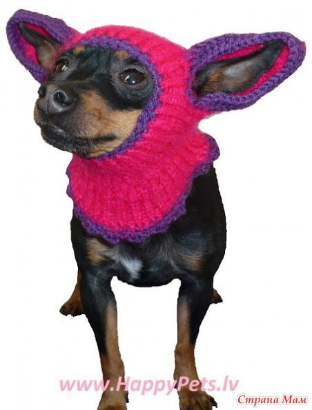 Вязанная шапка для собака