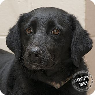 Adopted Sage Urgent Miami County Animal Shelter In Troy Ohio Adopt Or Foster 2 Year Old Female Retriever Mix Retriever Pet Adoption Animals