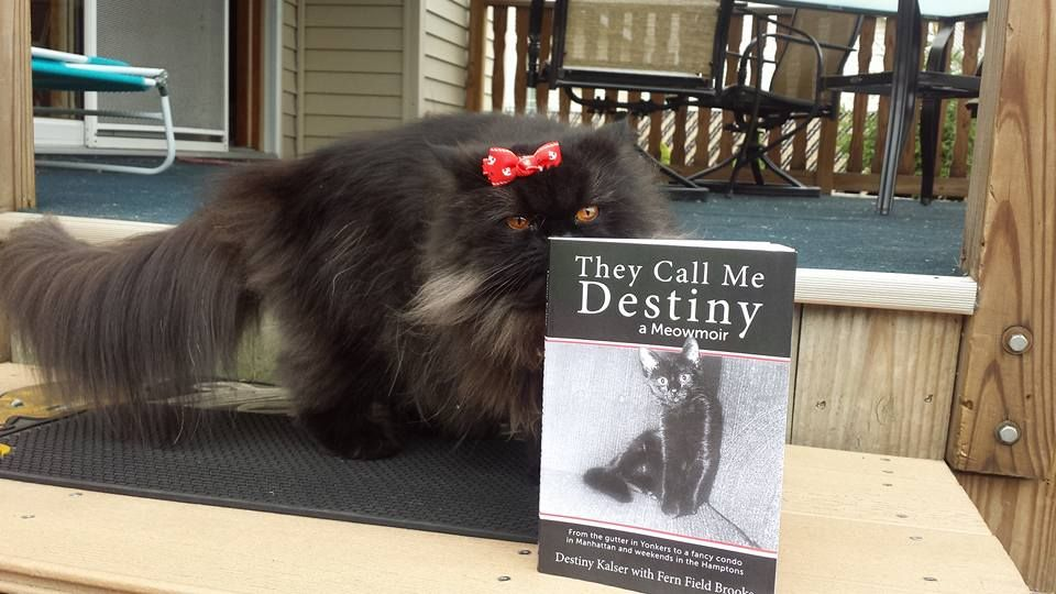 They Call Me Destiny A Meowmoir Book Review Starring Angel S Eyes Katzenworld Black Cat Appreciation Day Cat Pet Supplies Bengal Cat Full Grown