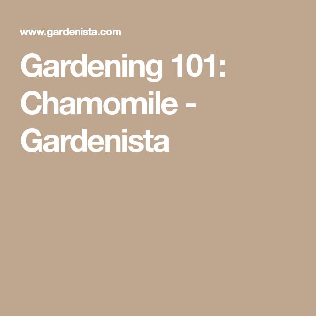 Gardening 101 Chamomile Garden Plant Care Herbs 640 x 480