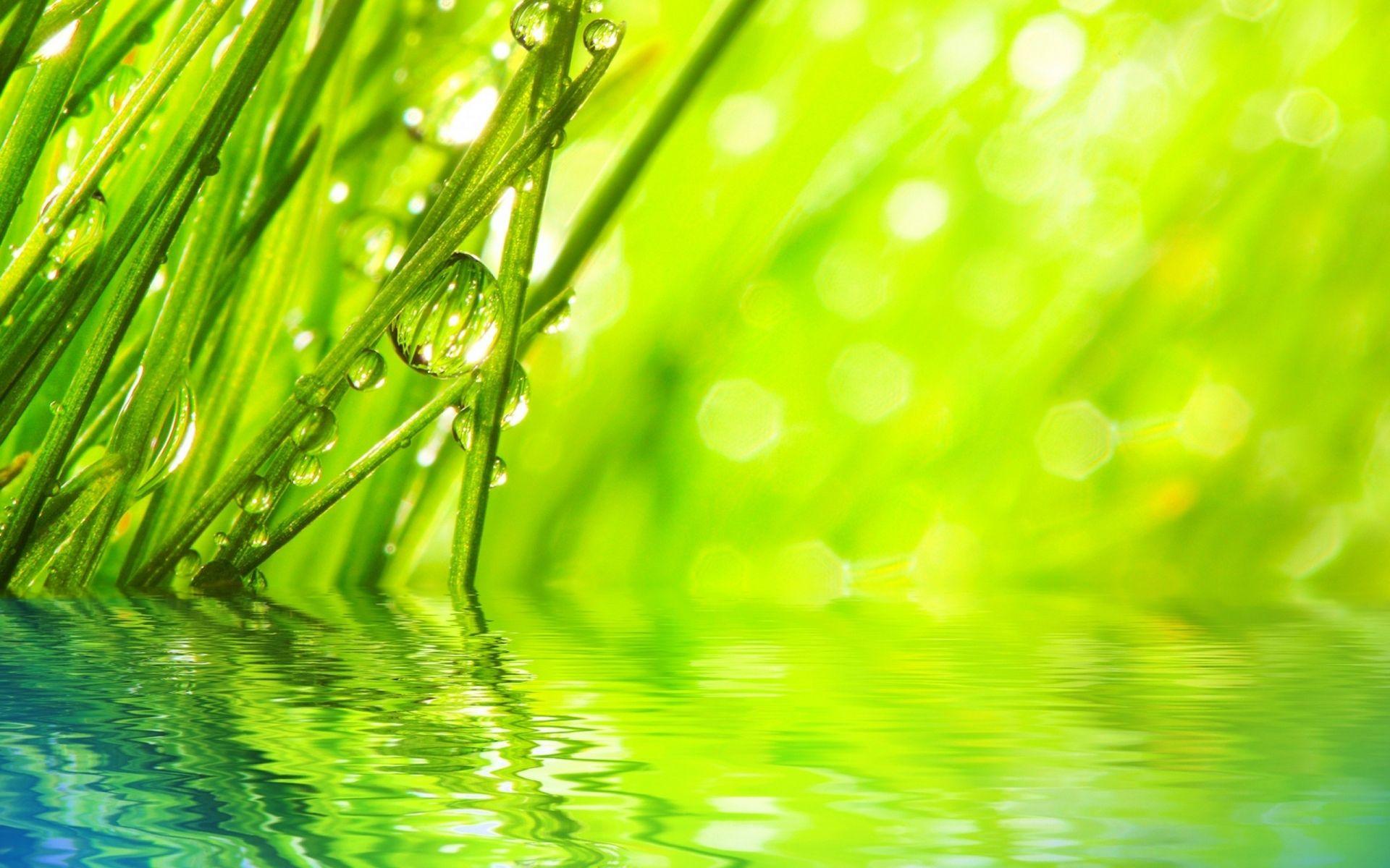 Wallpaper Hd Water Drops On Grass Hd Wallpaper Expert Grass