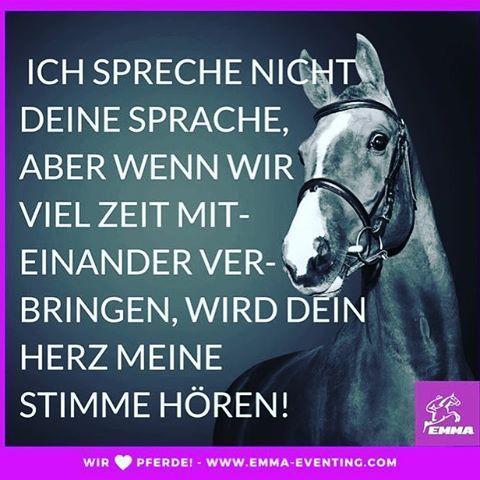 Ich Spreche Nicht Deine Sprache Aber Sprache Pferdespruche Pferde Zitate