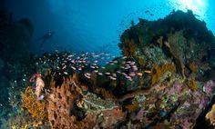 Blue Season Bali Dive Center