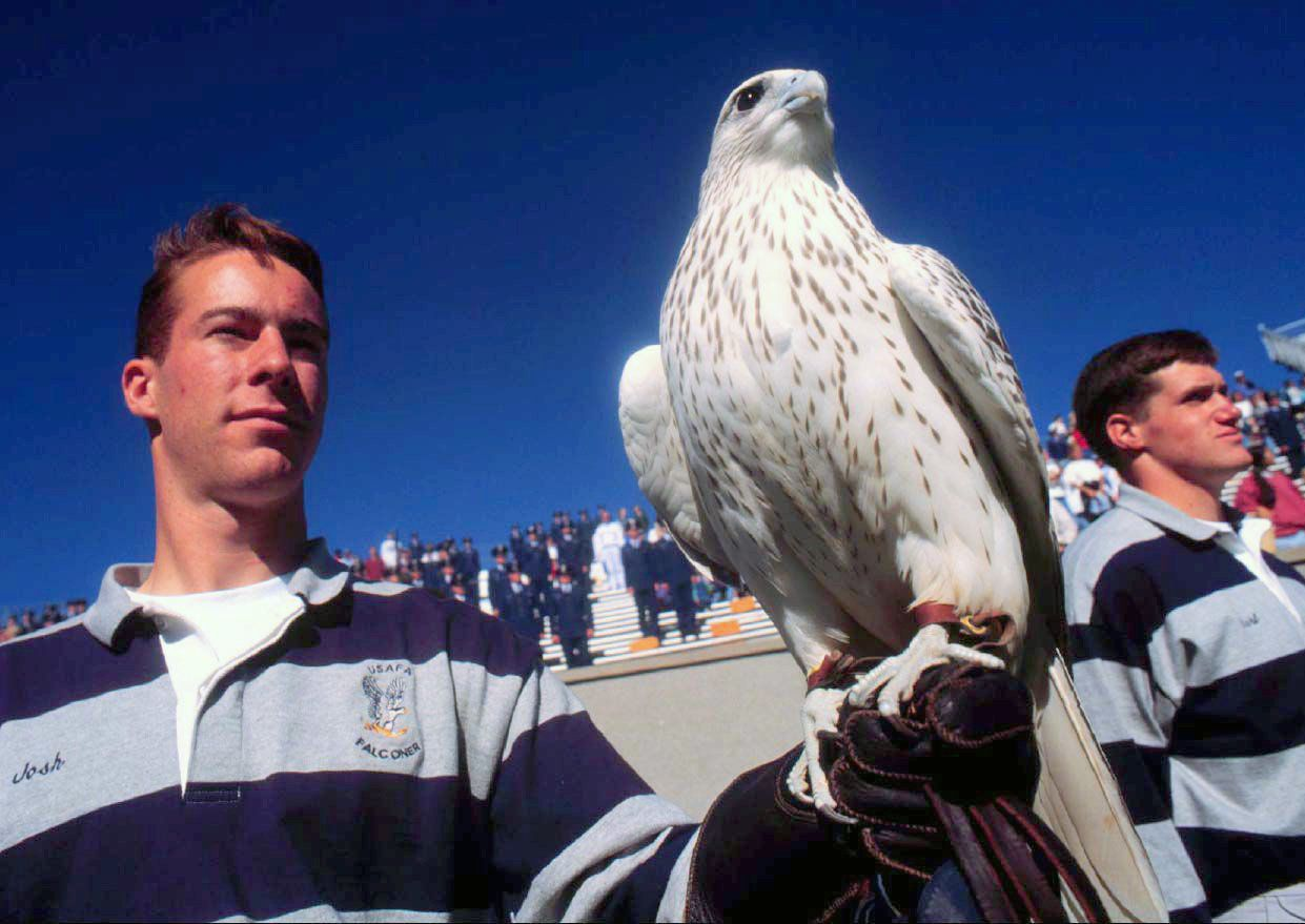Air Force Academy's Falcon Mascot Hurt In Army Football