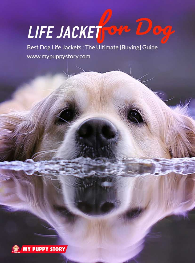 Best Dog Life Jackets 2019 My Puppy Story Dog Training Tips