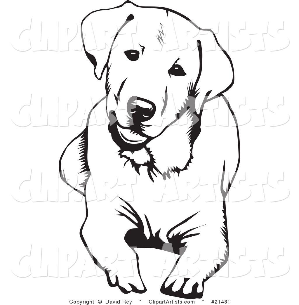 Vector Cute And Curious Labrador Retriever Dog Lying