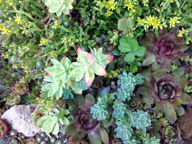 jardin de plantes grasses rocaille jardin pinterest jardin de plantes grasses plantes. Black Bedroom Furniture Sets. Home Design Ideas