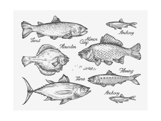Hand Drawn Fish. Sketch Trout, Carp, Tuna, Herring