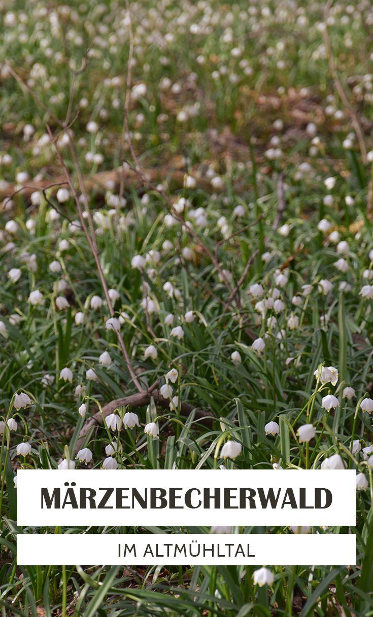 Märzenbecherwald Ettenstatt