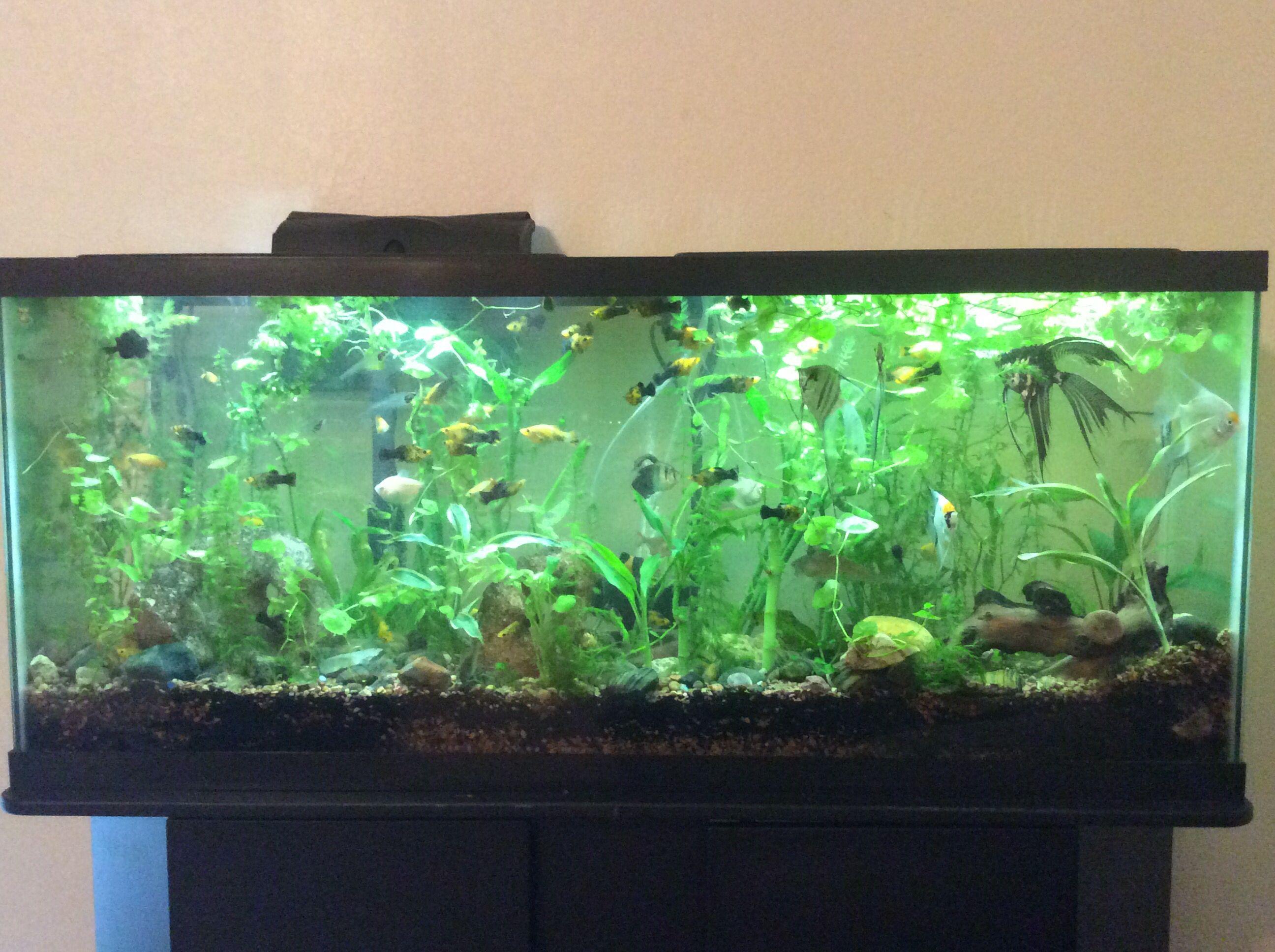 55 Gallon Tropical Planted Community Aquarium Fish Tank 55 Gallon Aquarium