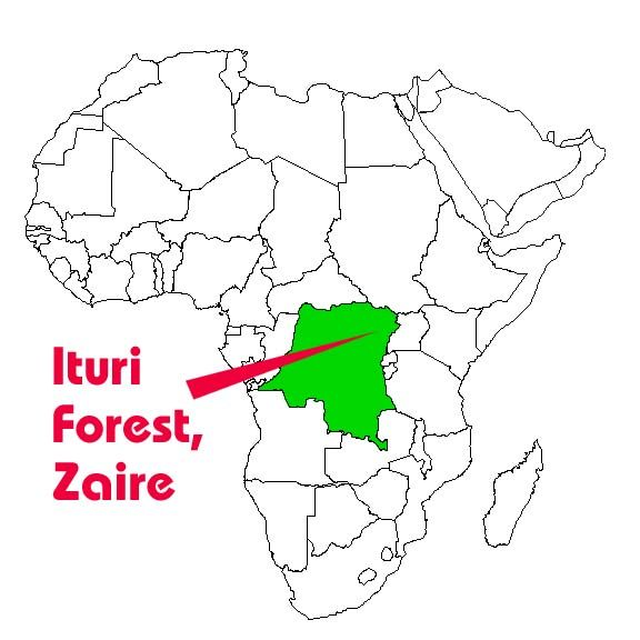 The Mbuti of Zaire | Indigenous: the World | African countries