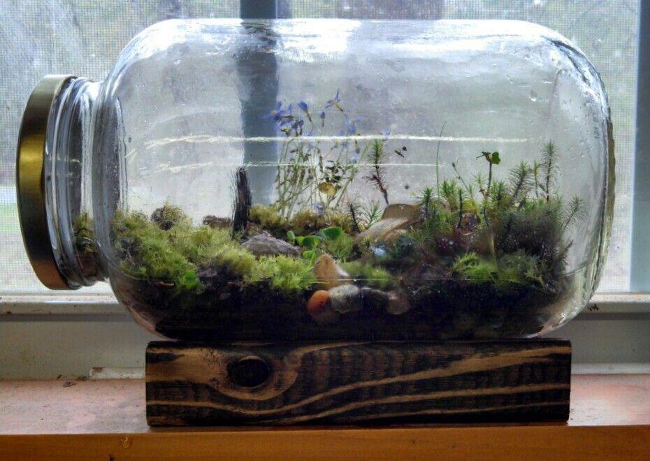 Image result for DIY ecosystem