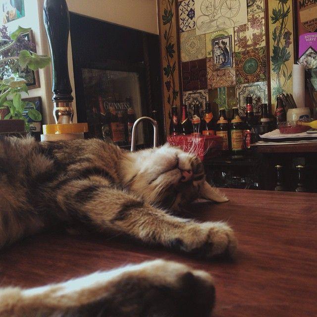Paw Shop - Bar à chat