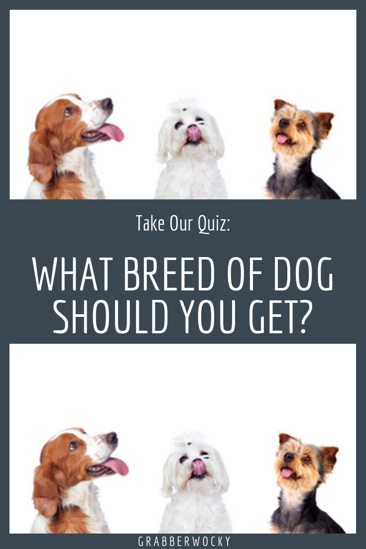 What Type Of Dog Should I Get Quiz If You Are Thinking About Getting A Dog You Should Take This Quiz See Which Breed Of Dog Breed Quiz Dog Quiz