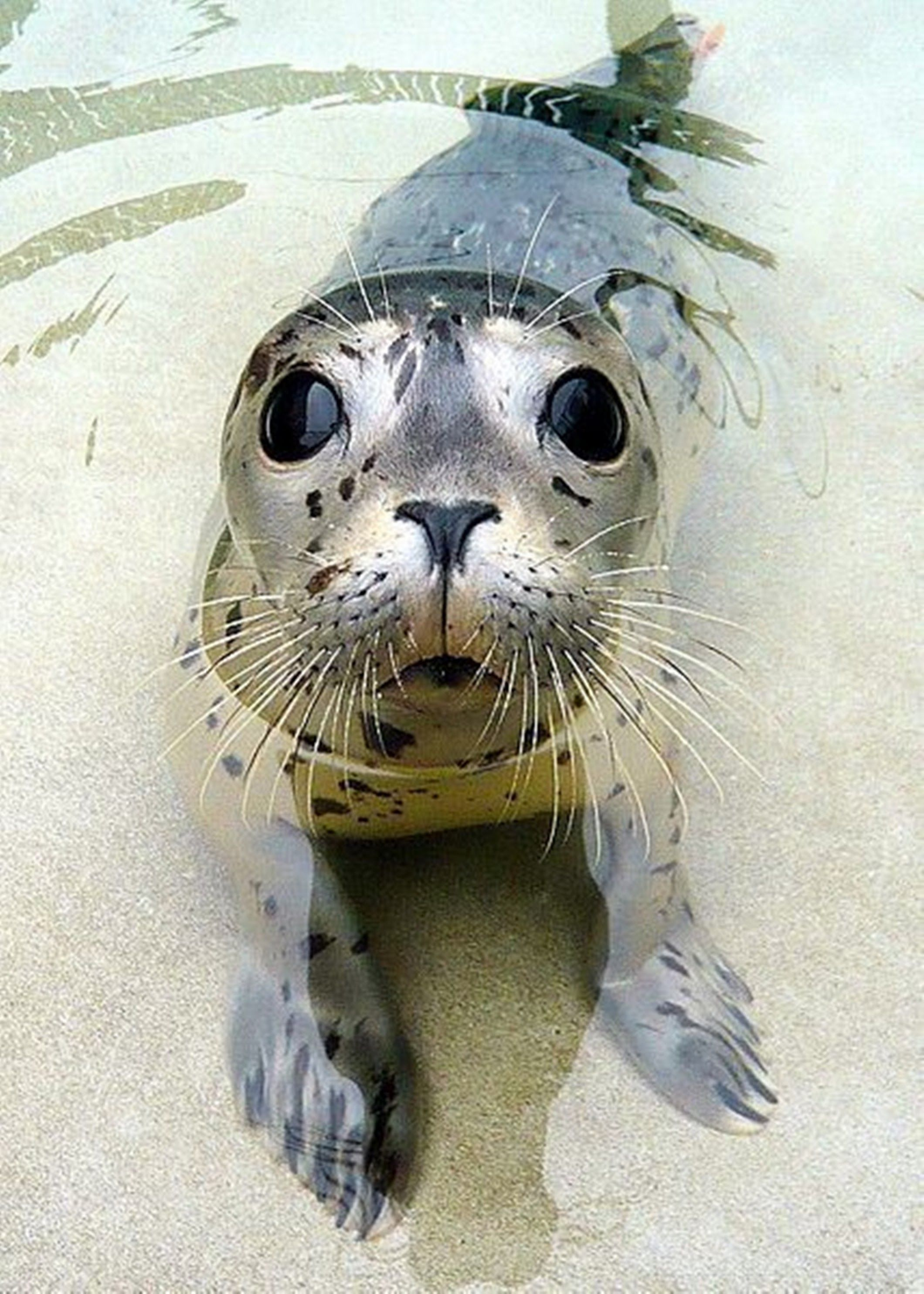 My What Big Eyes You Have Cute Baby Seal
