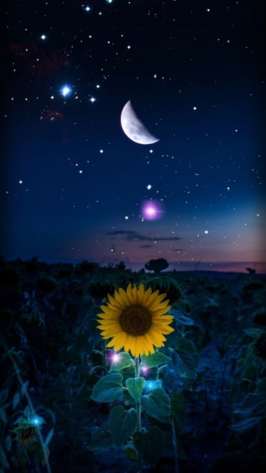Best Nature Phone Wallpaper With High Quality Starry Night Wallpaper Sunflower Wallpaper Sunflower Photography