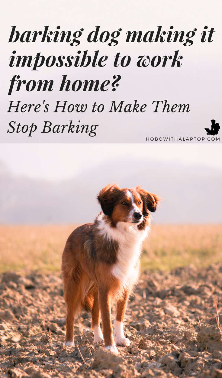 How To Make Street Dogs Stop Barking With A Simple Trick Street Dogs Dogs Stop Dog Barking