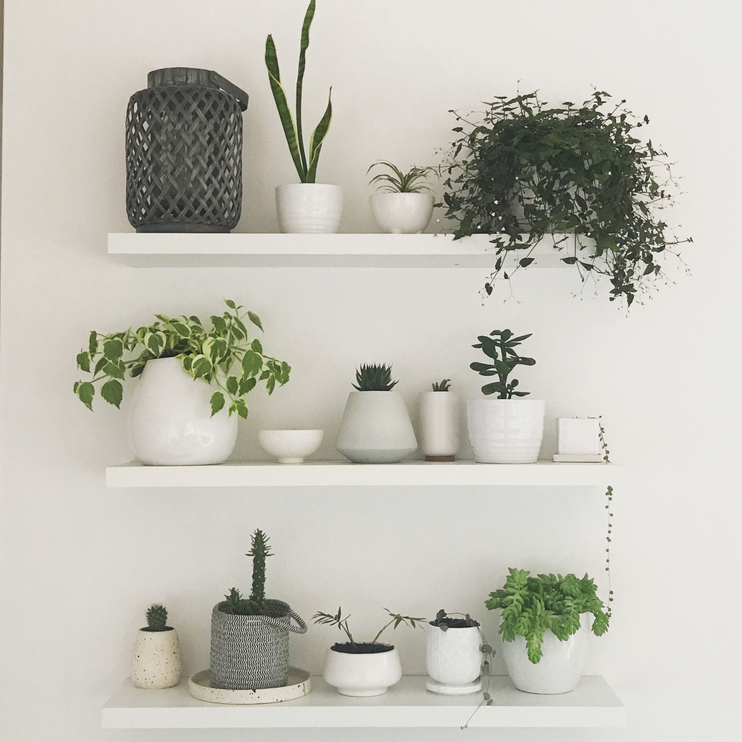 White Floating Shelves Living Wall White Pots House Plants In