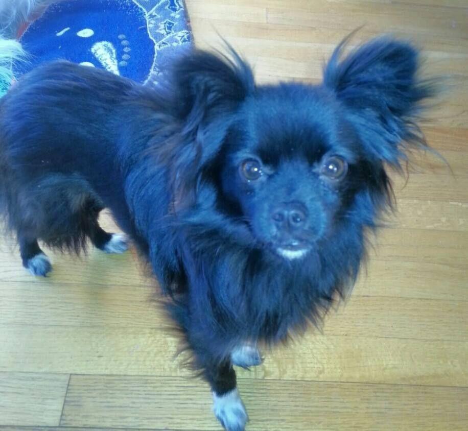Mobile Uploads Alcona Humane Society Facebook Humane Society Losing A Dog Human