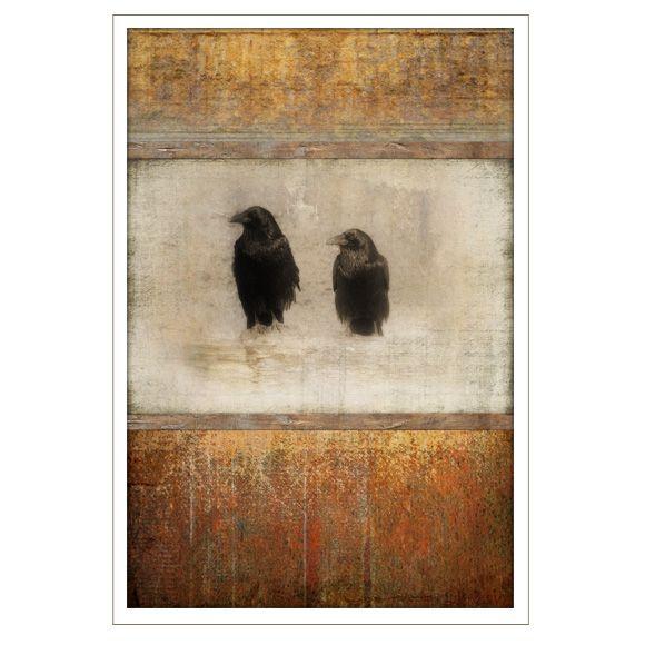 Crows Know Much - Robert Medina Cook