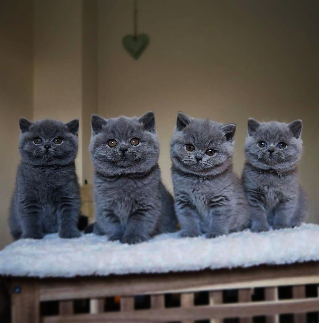 It S A Bit Cold Outside Kittens Cutest Cute Cats Beautiful Cats