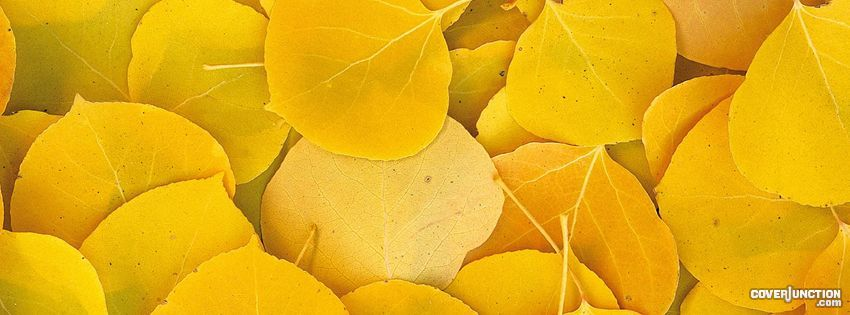 The Color Is Great Facebook Profile Cover Yellow Aesthetic Yellow Color Yellow Leaves