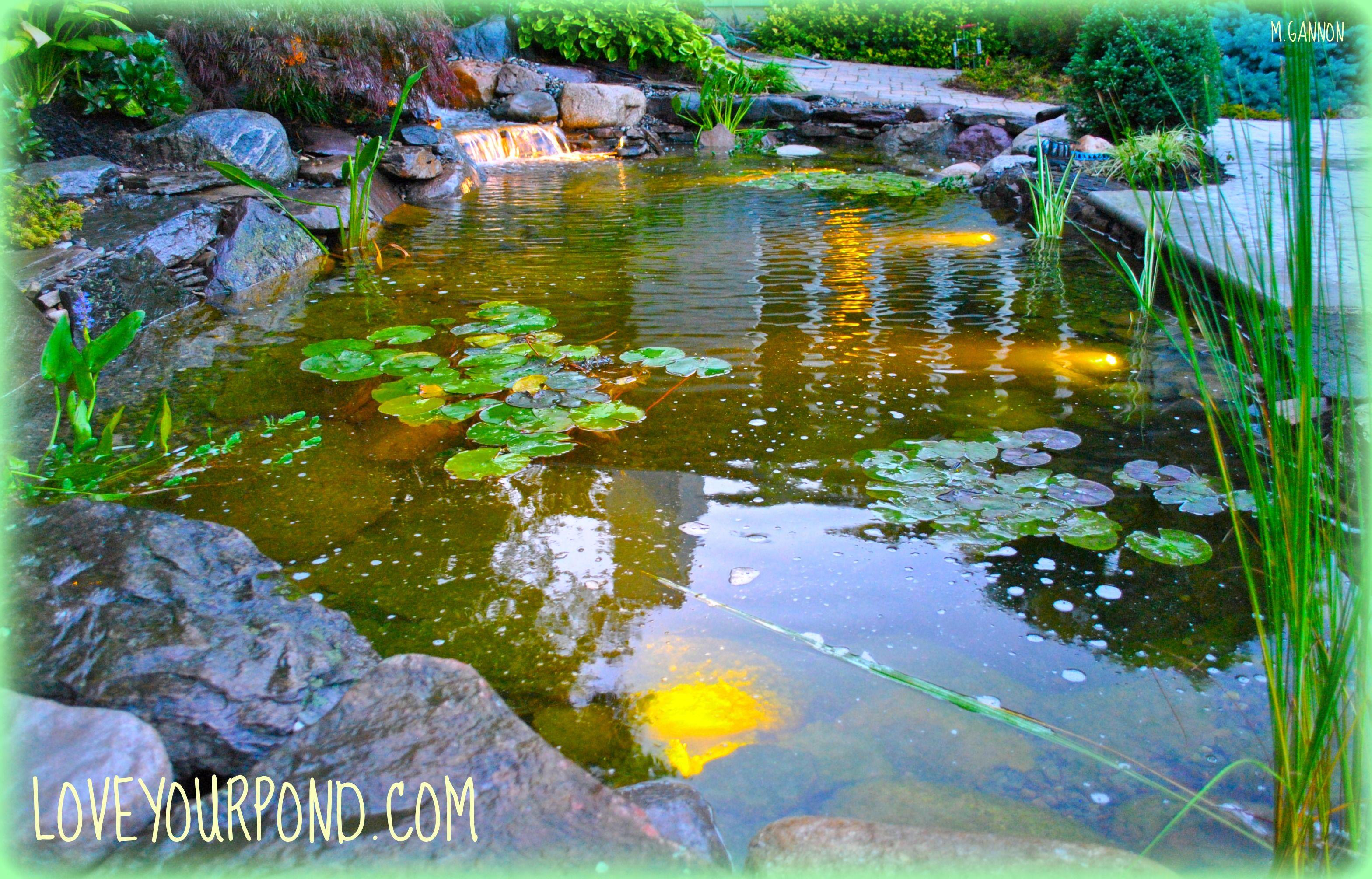 New Jersey Koi Pond Water Garden Professionals Full Service Aquatics Water Gardens Pond Water Garden Goldfish Pond