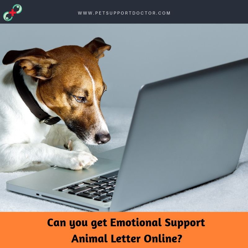 Pin by petsupportdoctor on Emotional Support Animal