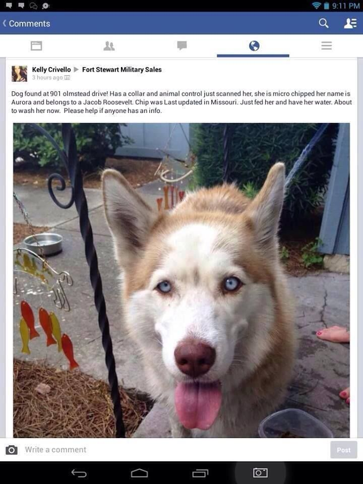 June 22 Found female named Aurora in Ft Stewart, Georgia ...
