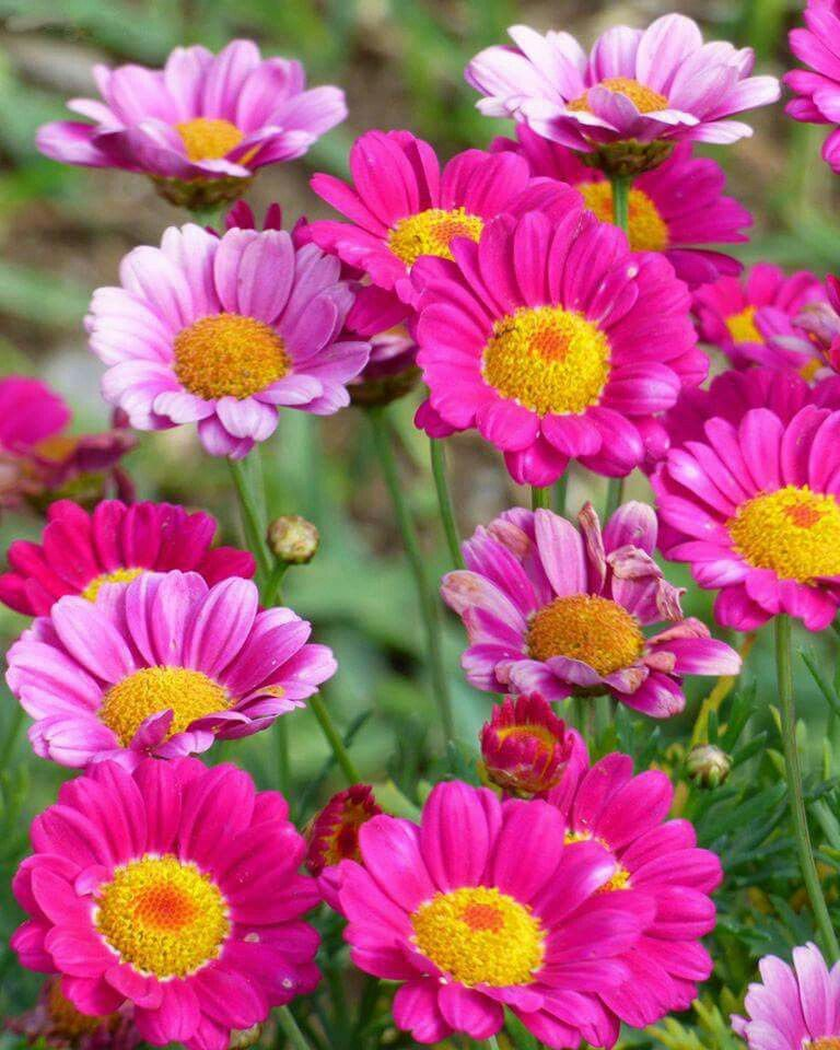 Flores Bluten