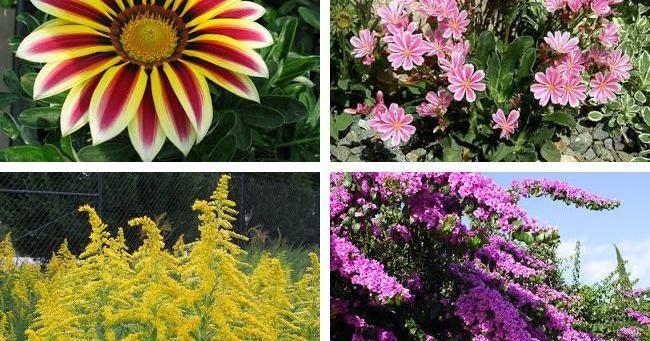Flores que crecen rápido en nuestro jardín Plantas RED