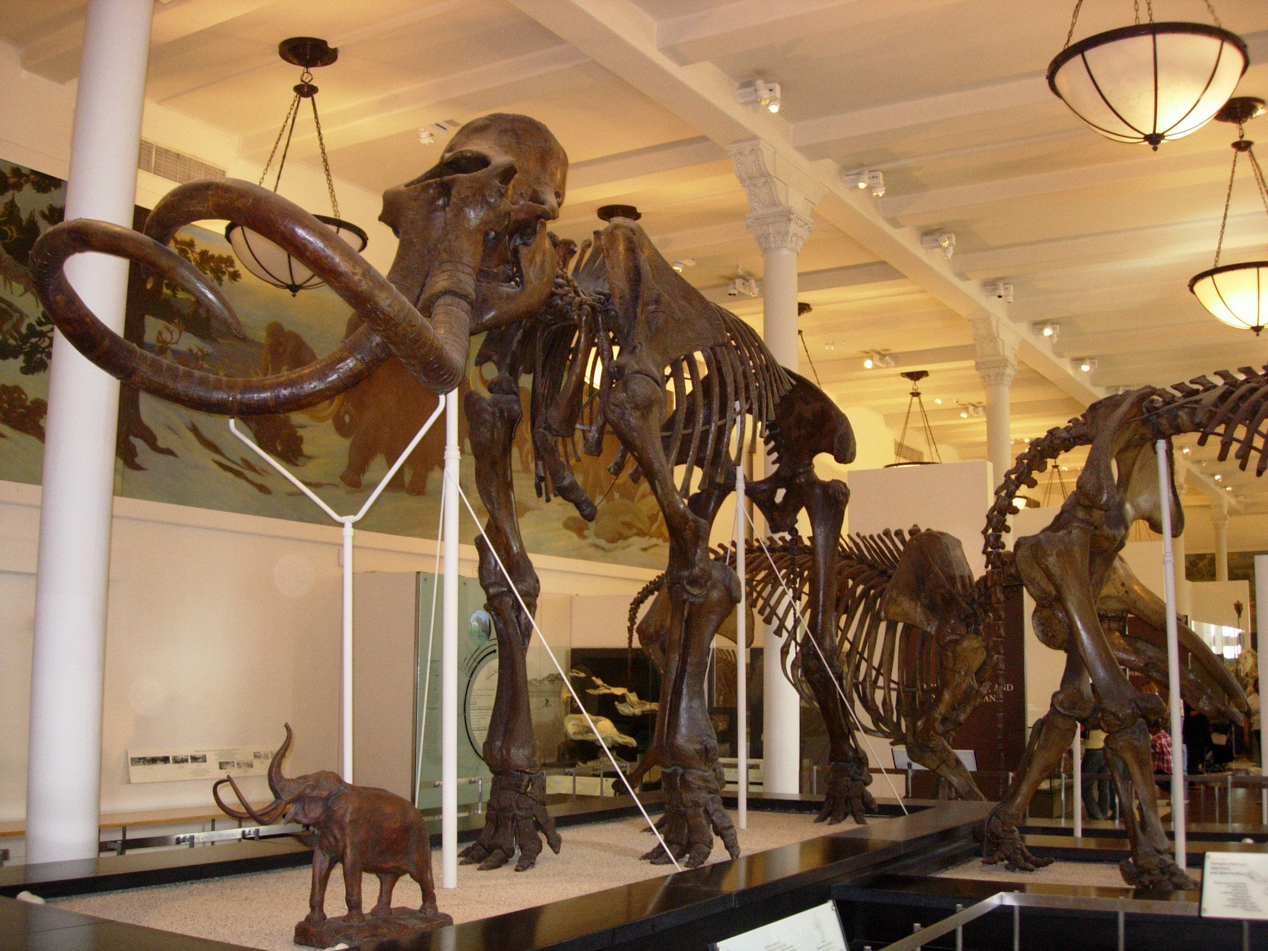 natural history museum dinosaurs - Google Search ...