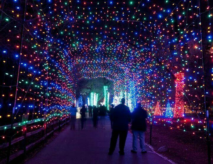 Zoo lights! Detroit Pinterest Zoo lights