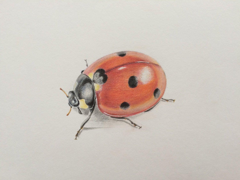 Colored pencil drawing ladybirdoriginal artladybird artwall decor
