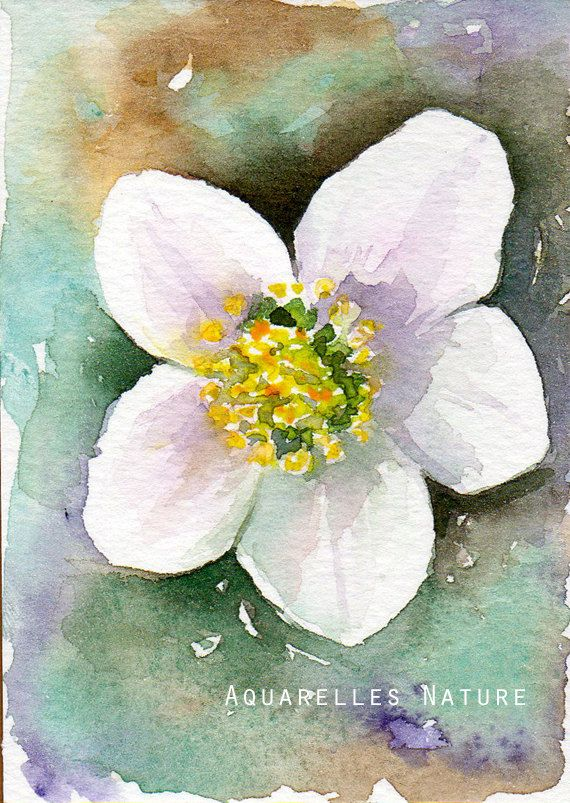 Winter Rose Aceo Original Watercolor Of A Christmas Rose