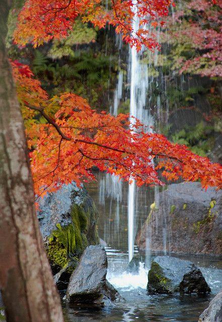 Crônicas de um romance com a Natureza