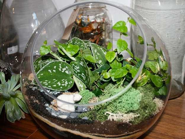 Indoor Plant Ideas | Glass Plant Terrarium, Small Interior Decorating With Indoor  Plants