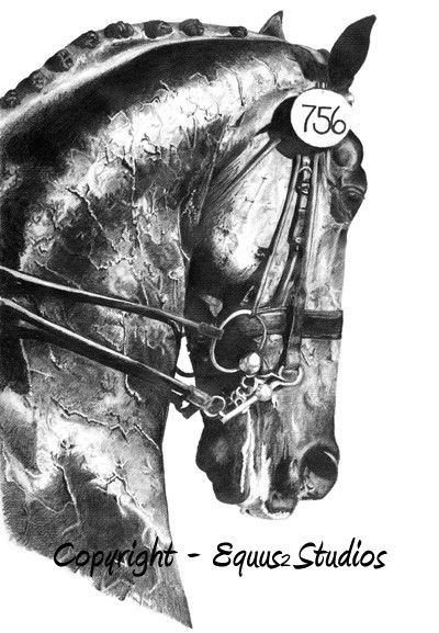 Dressage Drawing Horse Art