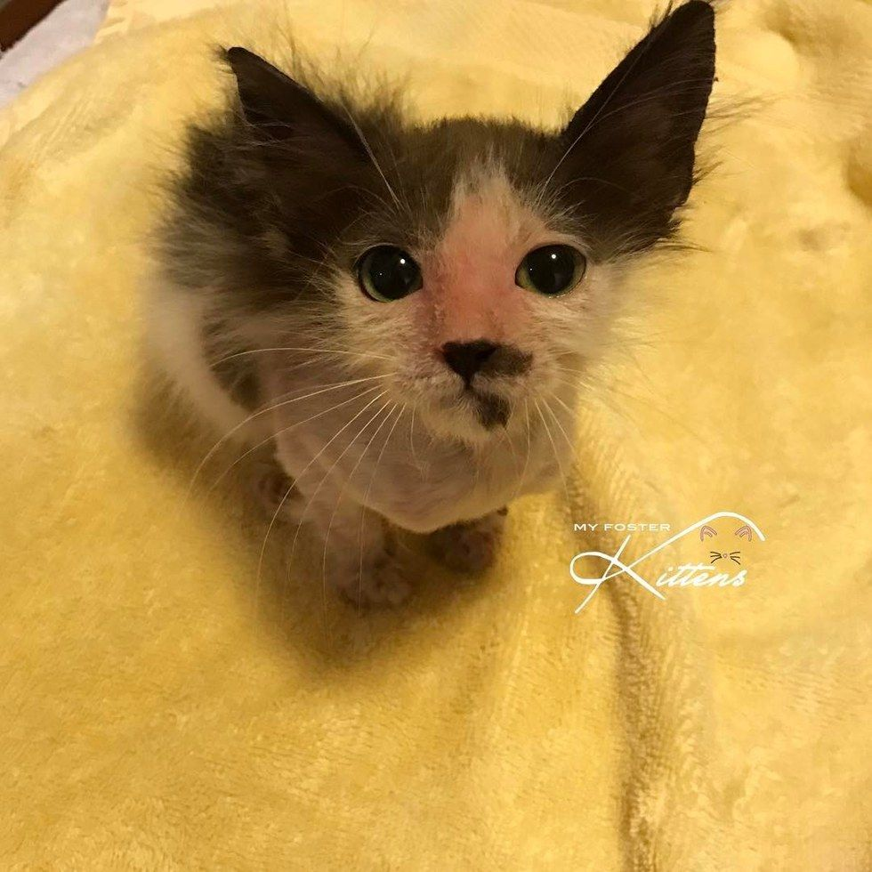Woman saves sick kitten while others gave up the transformation