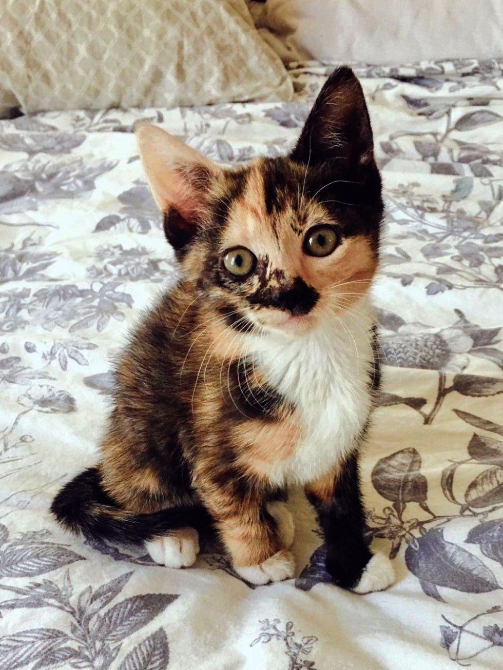 Kittens Oc Craigslist Kittens Card Game Kittens cutest