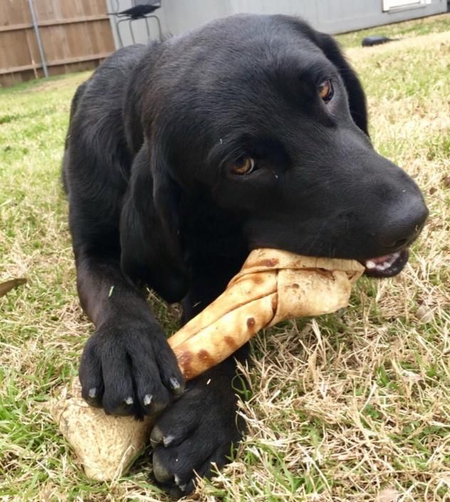Adopt Betty On Petfinder Black Labrador Retriever Retriever Dog Labrador Retriever Dog